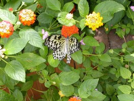 butterly and flowers