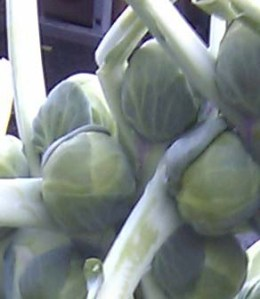 interesting vegetable - closer