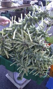 interesting vegetable