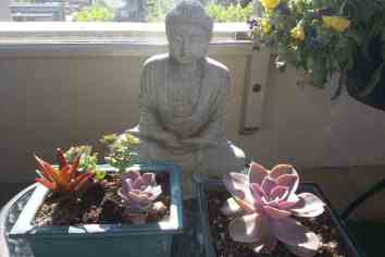 buddha with succulents